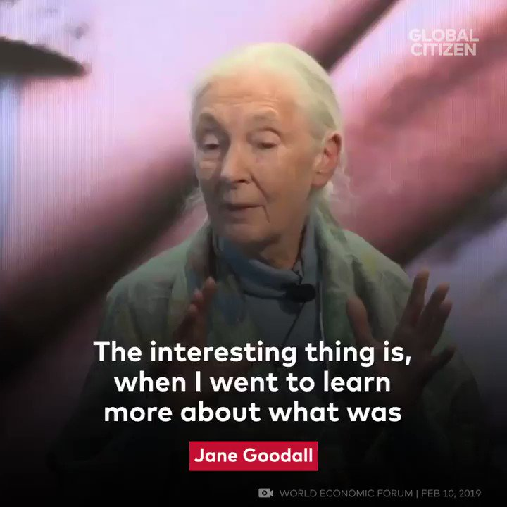 Jane Goodall is our hero.