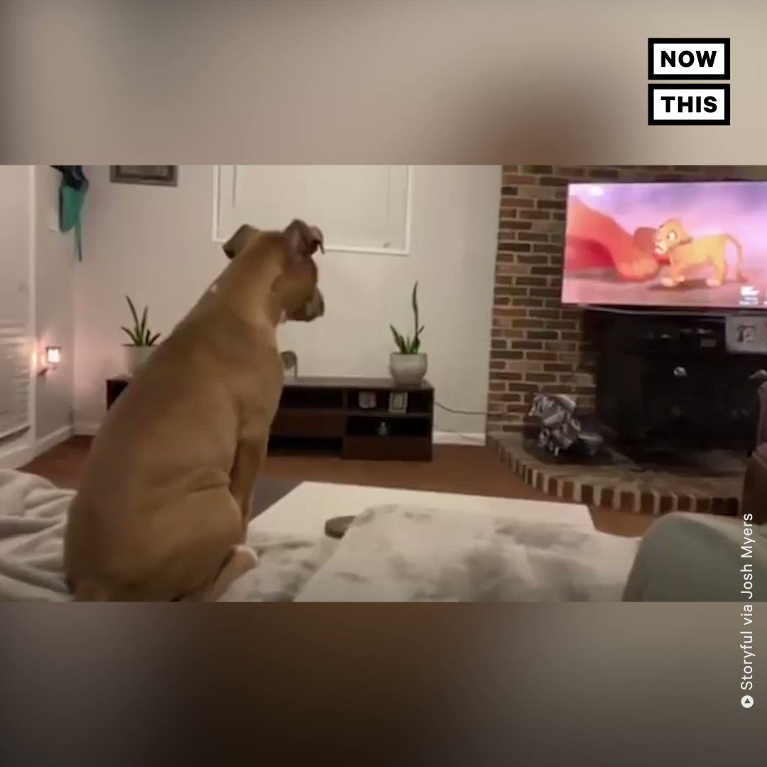 Watch this dog react to the saddest 'Lion King' scene