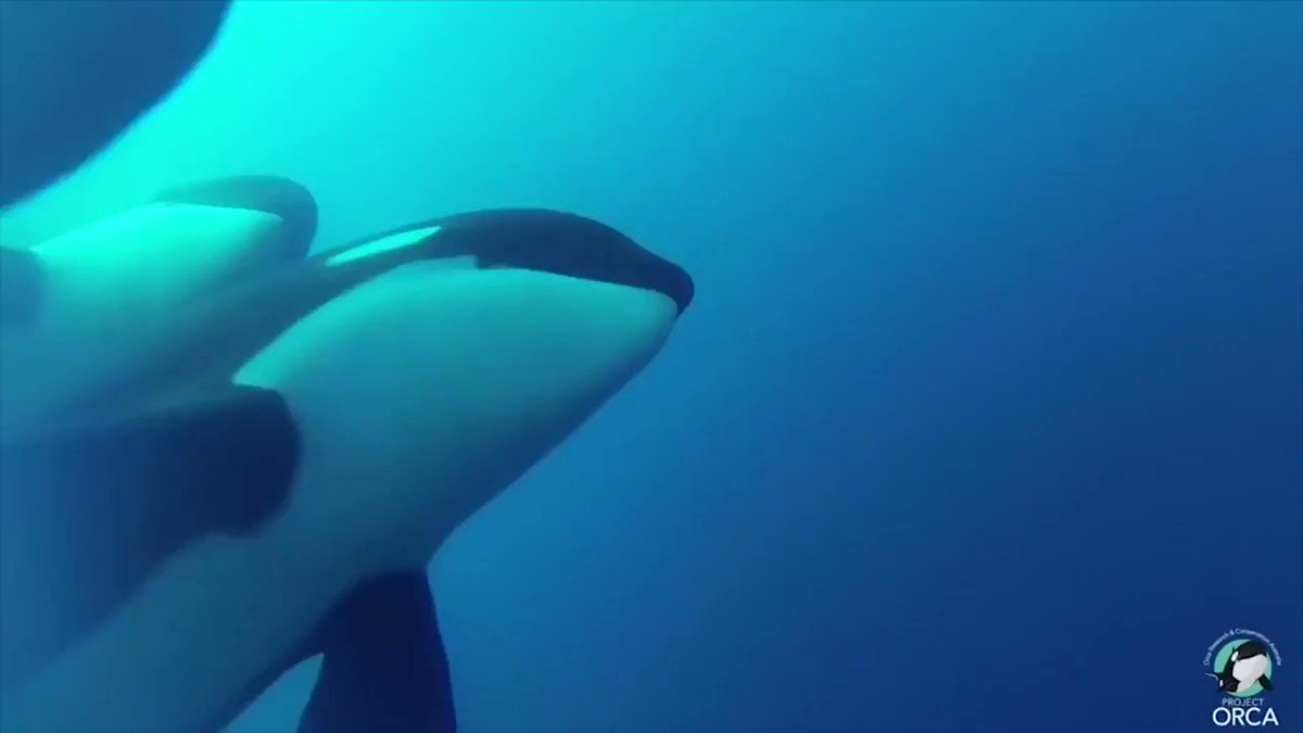 Scientists have found what could be a new kind of killer whale https://t.co/SYpNPdjLMy https://t.co/r8Zubduj2I