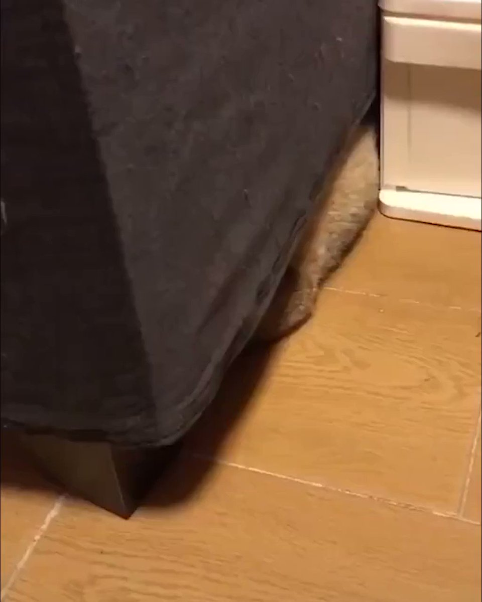 There's something under my sofa...