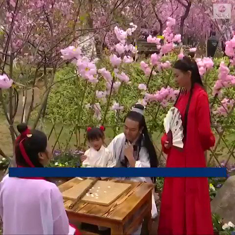 IN FULL BLOOM: Hundreds of thousands of visitors flocked to southwest China to experience beautiful, fragrant blooming of cherry blossoms, Chinese flowering crabapple trees and other colorful, springtime flora. http://abcn.ws/2Fc7cUs