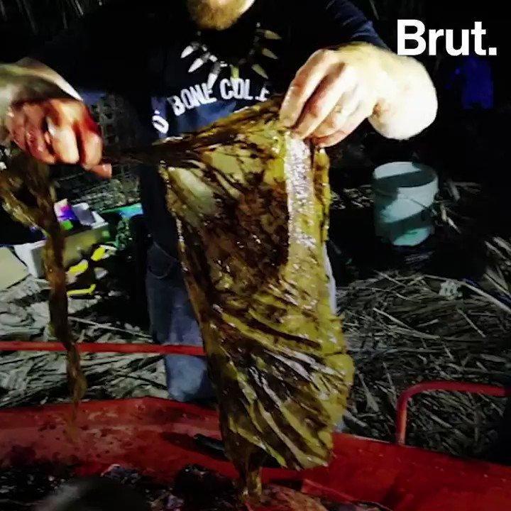Pendant ce temps-là aux Philippines...  Une baleine s'échoue avec 40 kg de plastique dans l'estomac.