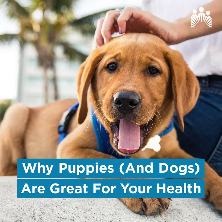 Did you know that puppies (and dogs) make a great contribution to your total health? Find out why. 🐶 #NationalPuppyDay