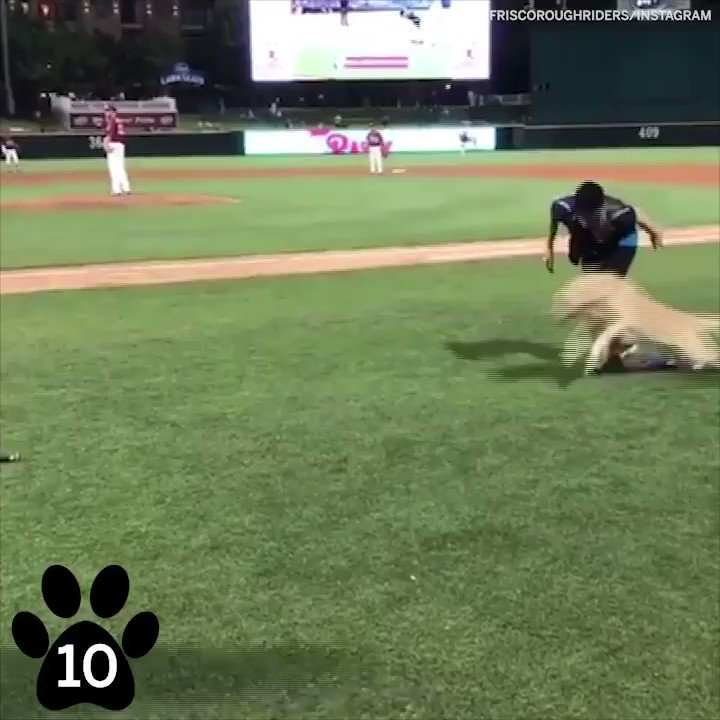 In honor of #NationalPuppyDay, here are our top 10 sporty dogs �� https://t.co/BLp7nUzR7l