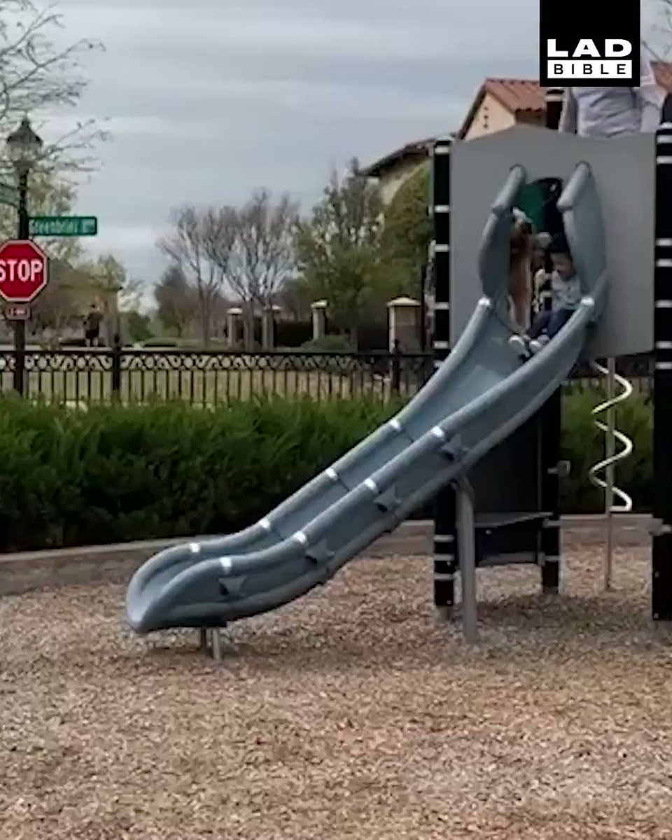 'The dog wanted a go down the slide' 😂😂