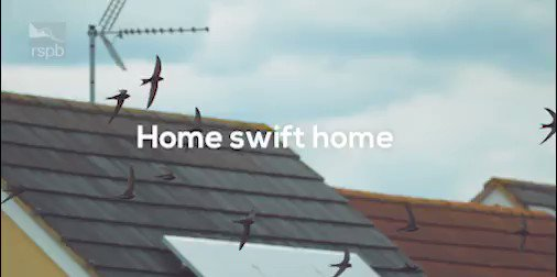 We are so close to reaching our target of 1,000 swift boxes before they arrive at the end of April. There are different ways you can provide a home for swifts, can you help? http://natu.re/2Yvlub #WingComing #Swifts
