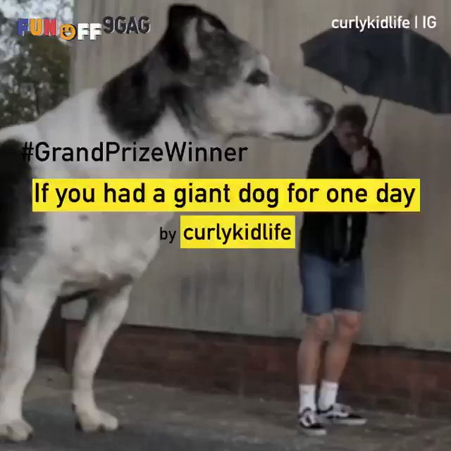 """9GAG Fun Off Season 3 came to an end. Thank you all for joining. We have finally chosen the Grand Prize Winner! Congratulations to @Curlykidlife on winning our USD$10,000 grand prize with his video """"If you had a giant dog for one day!"""" - Music by Markvard: https://soundcloud.com/markvard"""