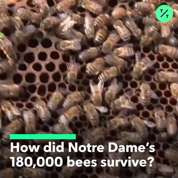 Notre Dames approximately 180,000 bees survived the #NotreDameFire