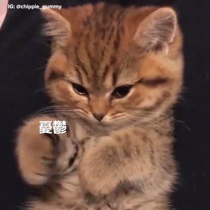 全部ポイしてくれる子猫