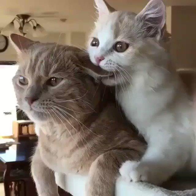 耳をハムハム