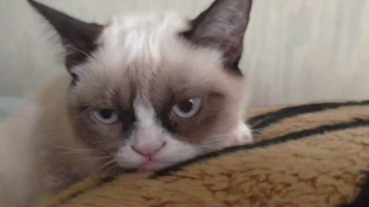 Today we celebrate the legacy of @RealGrumpyCat. Watch her first video and more → https://goo.gle/2VvB8Rt