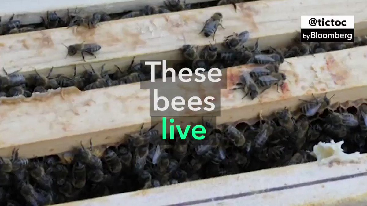 🐝🛎 Berlin has bee hotels. To save the local bee population, the Berlin Cathedral and others are giving them room and board #WorldBeeDay #SavetheBees
