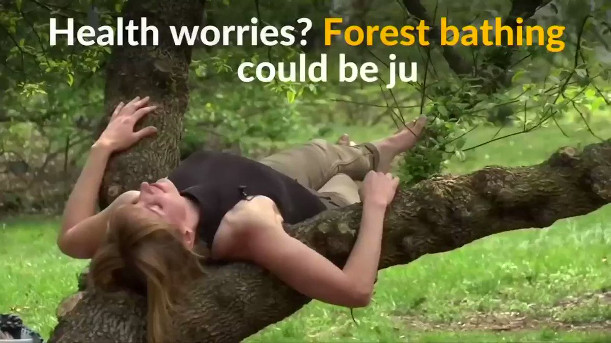 Image for the Tweet beginning: Forest bathing, a modern Japanese