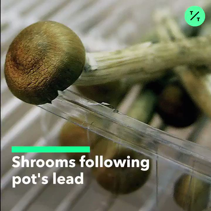 As cannabis legalization spreads across the globe, magic mushrooms may be following in its tracks