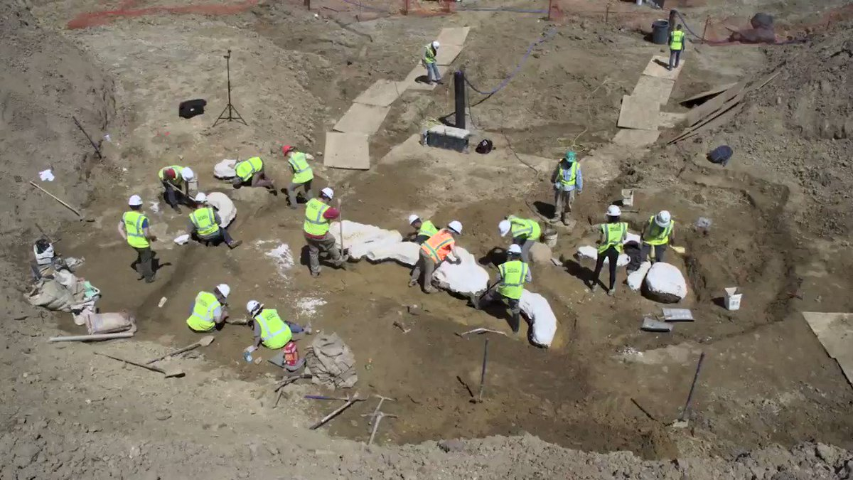 Watch paleontologists dig up the bones of an adult triceratops buried in bedrock near Denver, Colorado. Scientists say the fossils are 68 million years old. https://cnn.it/2IGxn8M