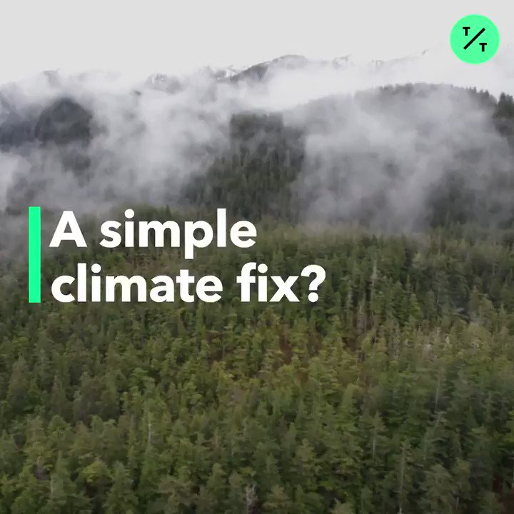 There's an easier way to fix climate change: Plant more trees