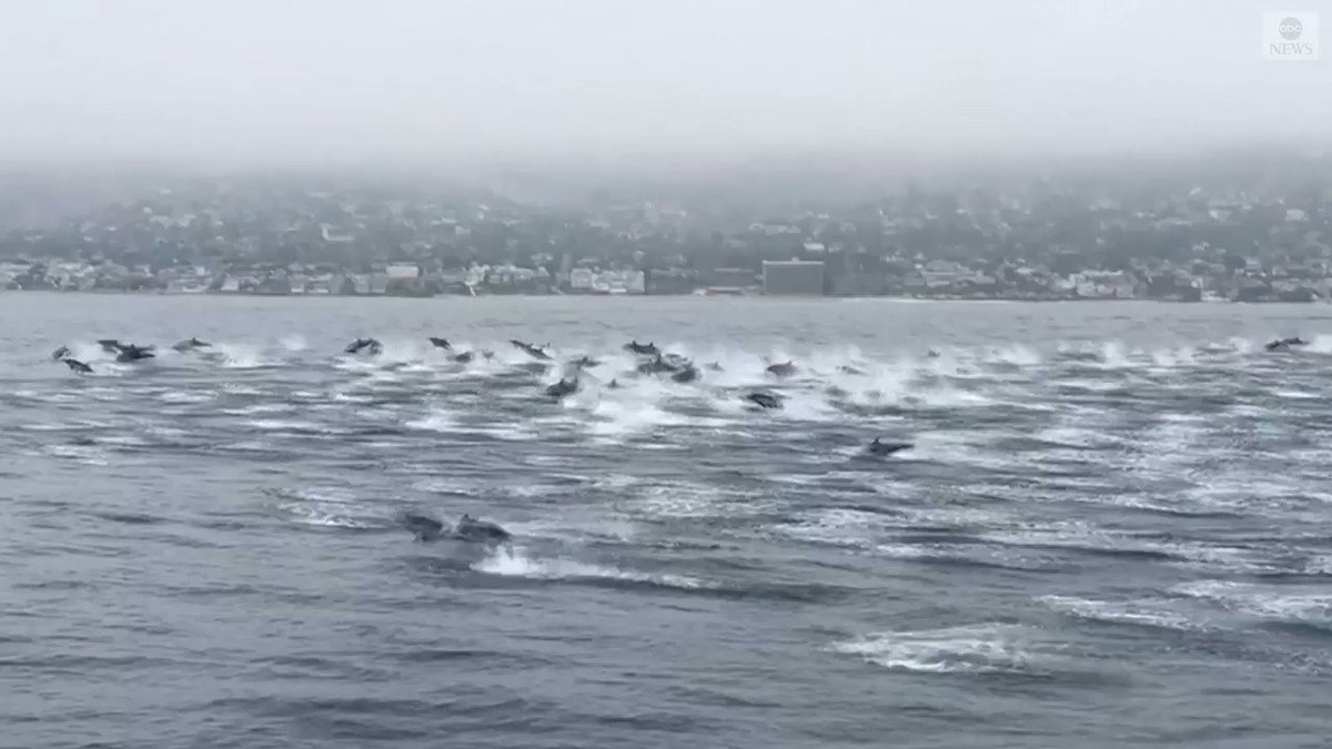 """WHAT A SIGHT! This huge pod of dolphins was spotted over the weekend gliding through the waves off the coast of Southern California.  The man who shot the video says """"they seemed super happy. You could really feel the energy."""" https://t.co/YC2K2Cq9o7 https://t.co/LILgpCC47W"""