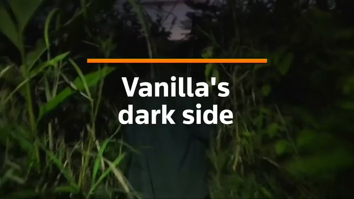 The sweet boom brought about by a global vanilla craze has soured costs in an epidemic of theft, mob justice and a dramatic fall in the quality of the coveted spice