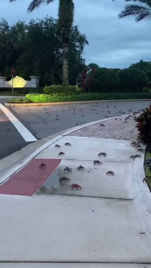 Hundreds Of Crabs Invade Florida Neighborhood In Terrifying Video. Should They All Be Killed Immediately?