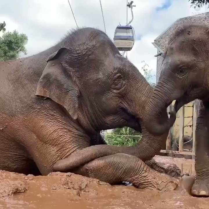 A 2-year-old playful elephant spent World Elephant Day with his mother, who the Taronga Zoo says has quite the patience dealing with her mischievous calf. http://abcn.ws/2yUaitq