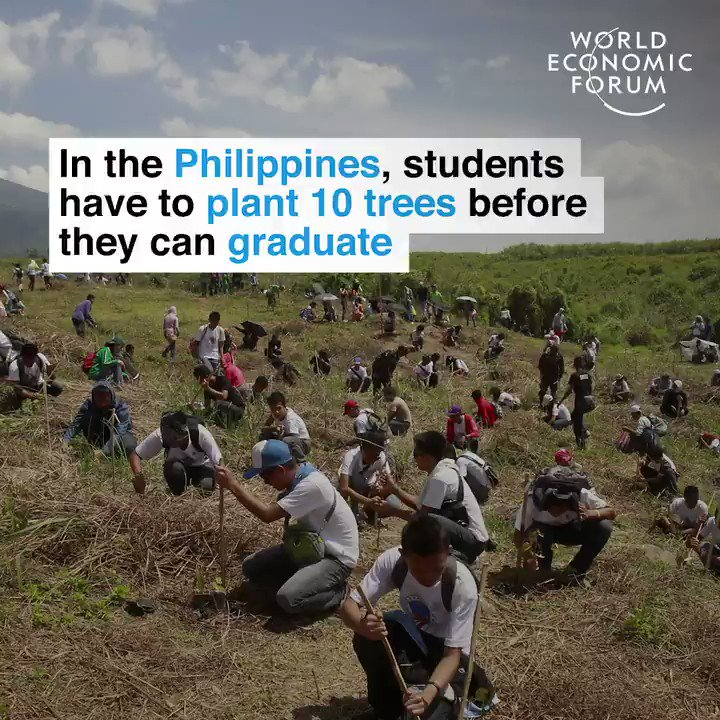 RT yographic39: In the Philippines, students have to plant 10 #Trees before they can #Graduate. #ClimateAction #CleanAir #PlantTree #Forests  #yogakc #IshaYogaKC #InnerEngineering #Yoga #Meditation