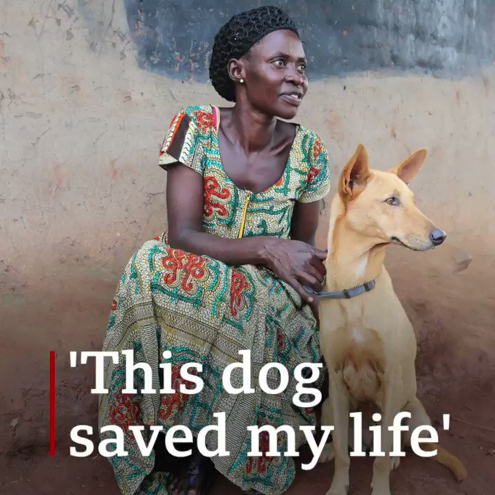 """""""This dog saved my life""""The Comfort Dog Project in Uganda was set up to transform stray dogs into healing therapy animals for child soldiers and survivors of warThis is Filda's story ❤️http://bbc.in/31Vpseh"""