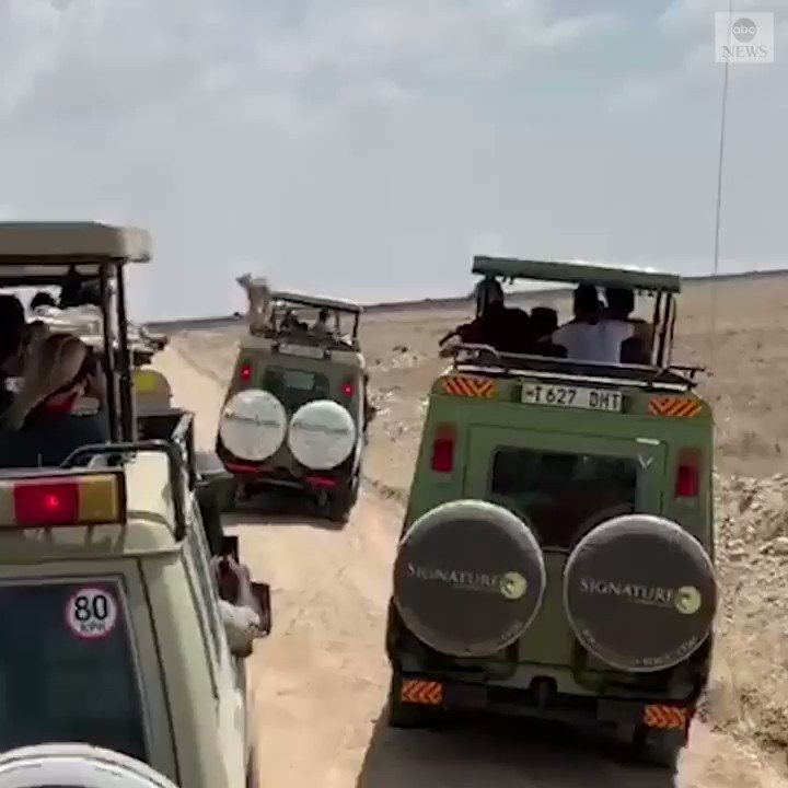 """""""Those people must be freaking out.""""A New Jersey family was on safari in the Serengeti when a cheetah decided to take a little rest on top of one of the Jeeps in their group. https://abcn.ws/34Houob"""