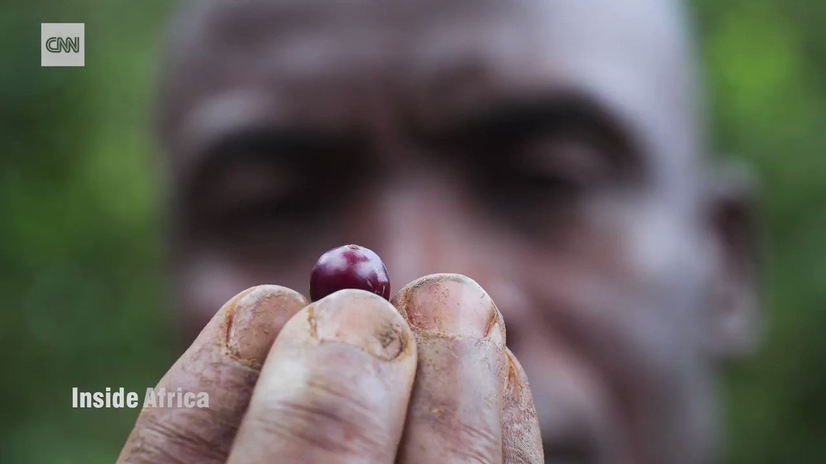 This rare coffee bean is typically grown in rainy areas of high altitude. Here's a look at what it takes to plant and prepare it. https://cnn.it/2UQR4il