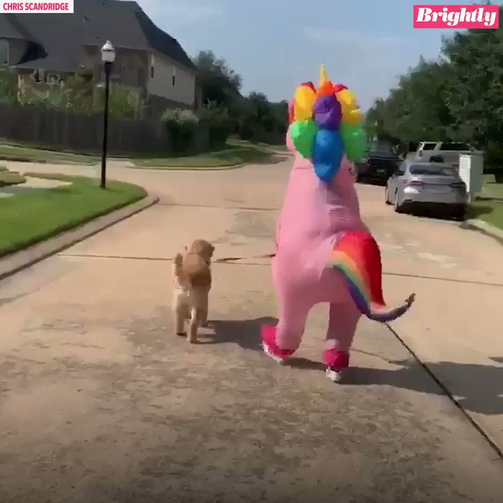 This daughter cracked up when her mom surprised her at bus stop dressed as unicorn! Here's why she did it: https://gma.abc/2kob1zm