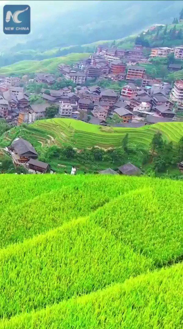 Amazing aerial scenery of Longji Rice Terraces in Guangxi, south China