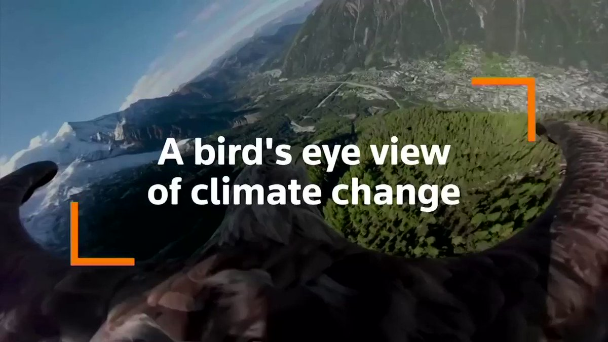 Equipped with a 360-degree camera mounted on his back, Victor the eagle is on a mission to raise awareness of climate change in the Alps https://reut.rs/2ME67sn