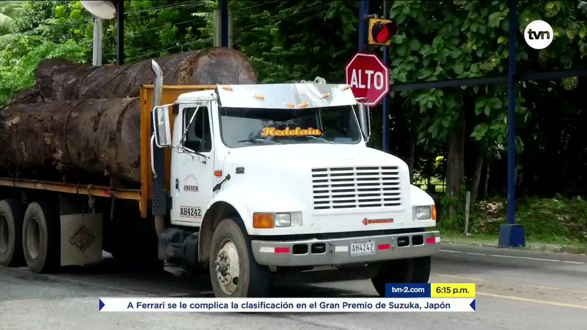 Autoridades colocarán un chip amarillo a los troncos de árboles que hayan sido talados legalmente. La madera que no cuente con este chip será decomisada #NoticiasTVN
