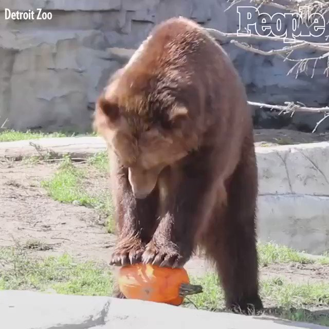 Who says animals cant have fall fun?