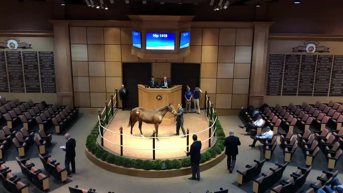 Exciting day for Hip 1419, my filly out of Then She Laughs, who sold for $40K at the @FasigTiptonCo Kentucky October Yearlings Sale. My beautiful girl was purchased by John Terranova from @Summerfieldsale consignment.Congrats and good luck! #FasigKY #AMEStud #WarDancer