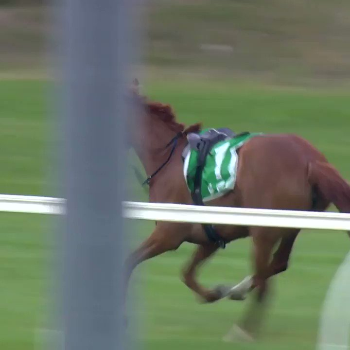 One of the most impressive chases you'll see from a clerk horse.   Rest in peace Woody. http://bit.ly/2NQ0OHS