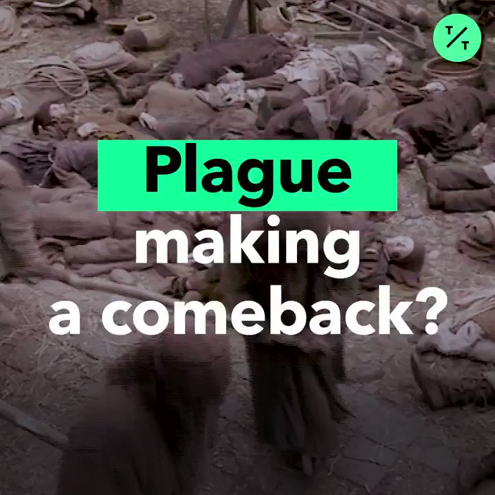 Is the plague making a comeback?