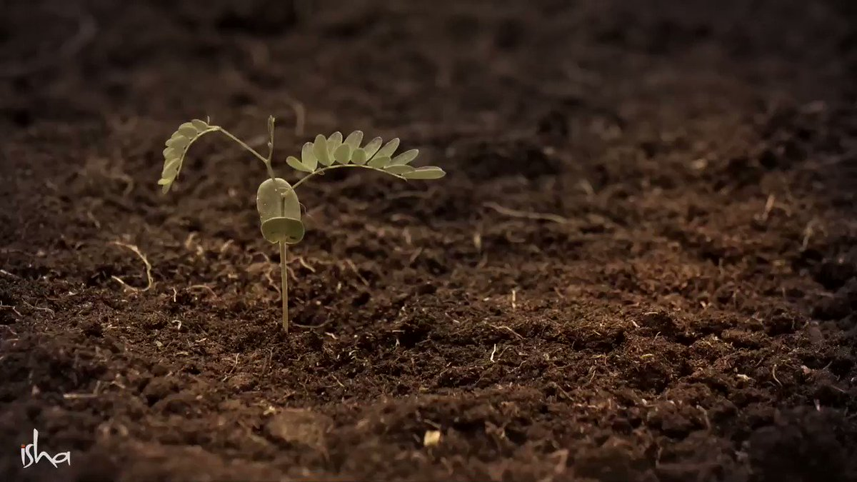 Protecting the soil of the nation is the most important step we need to take for wellbeing of future generations. This #WorldSoilDay lets pledge to ensure we leave a rich & fertile soil for future generations. -Sg @UNCCD @ibrahimthiaw #CauveryCalling