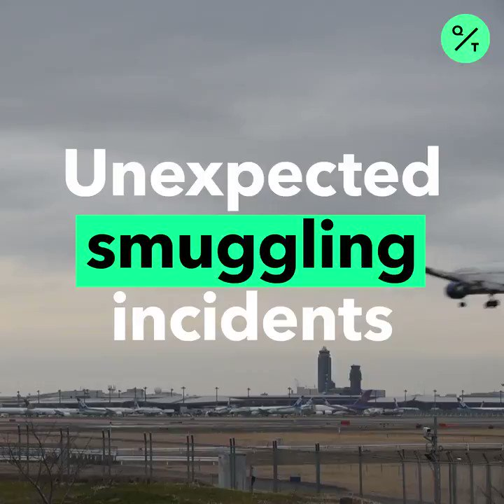 Anesthetized monkeys, cocaine, and a Harley-Davidson motorcycle are just some of the wildest things people have tried to smuggle onto airplanes