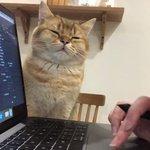 飼い主さんのためなら?どれだけ眠くても仕事が終わるまで見守る猫!w