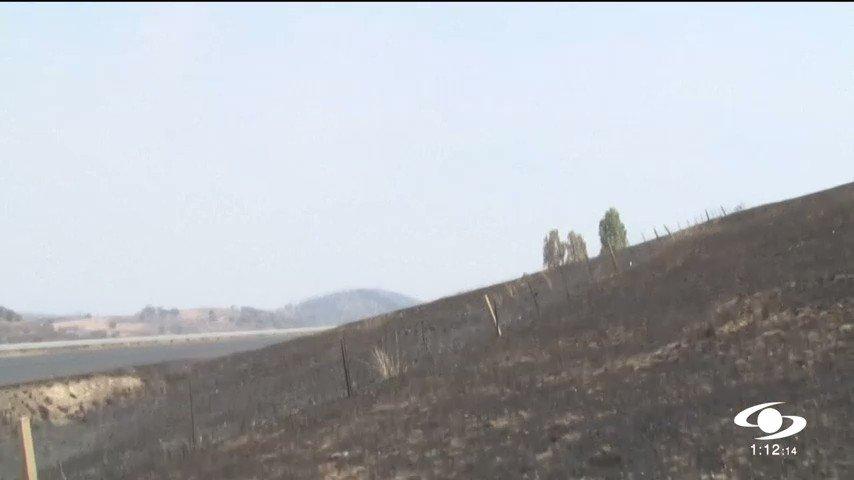 Incendios en Australia, una terrible tragedia ecológica en la que han muerto miles de animales http://noticiascaracol.com