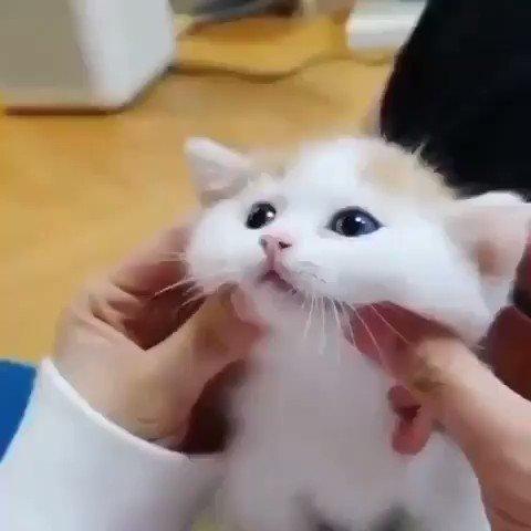 ほっぺがぷにぷにすぎる子猫