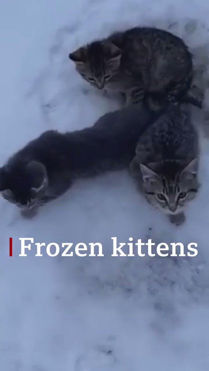 「まさか一晩中いたのか?」カナダで雪の朝、ケンダルさんはしっぽが凍りついて動けなくなっている子猫3匹を見つけた。「捨てられたのかい?何て残酷な。」車にあった温かいコーヒーで溶かして家へ連れて行った。元気で食欲もあり心配ないとわかり、SNSにこの動画を