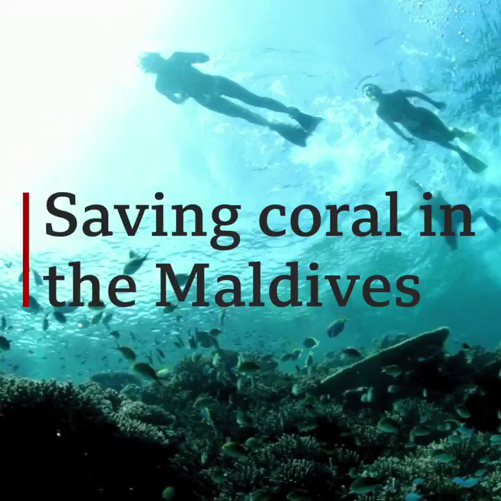 Coral reefs are home to more than a quarter of the world's fish species... A fascinating @BBCTravel film.