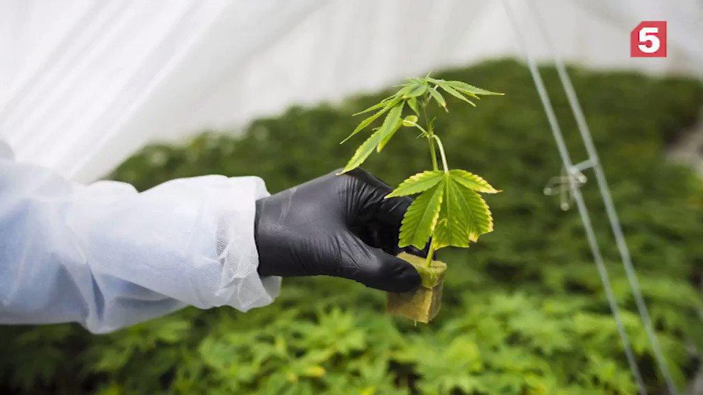 Поправки в закон выращивание конопли есть польза от конопли