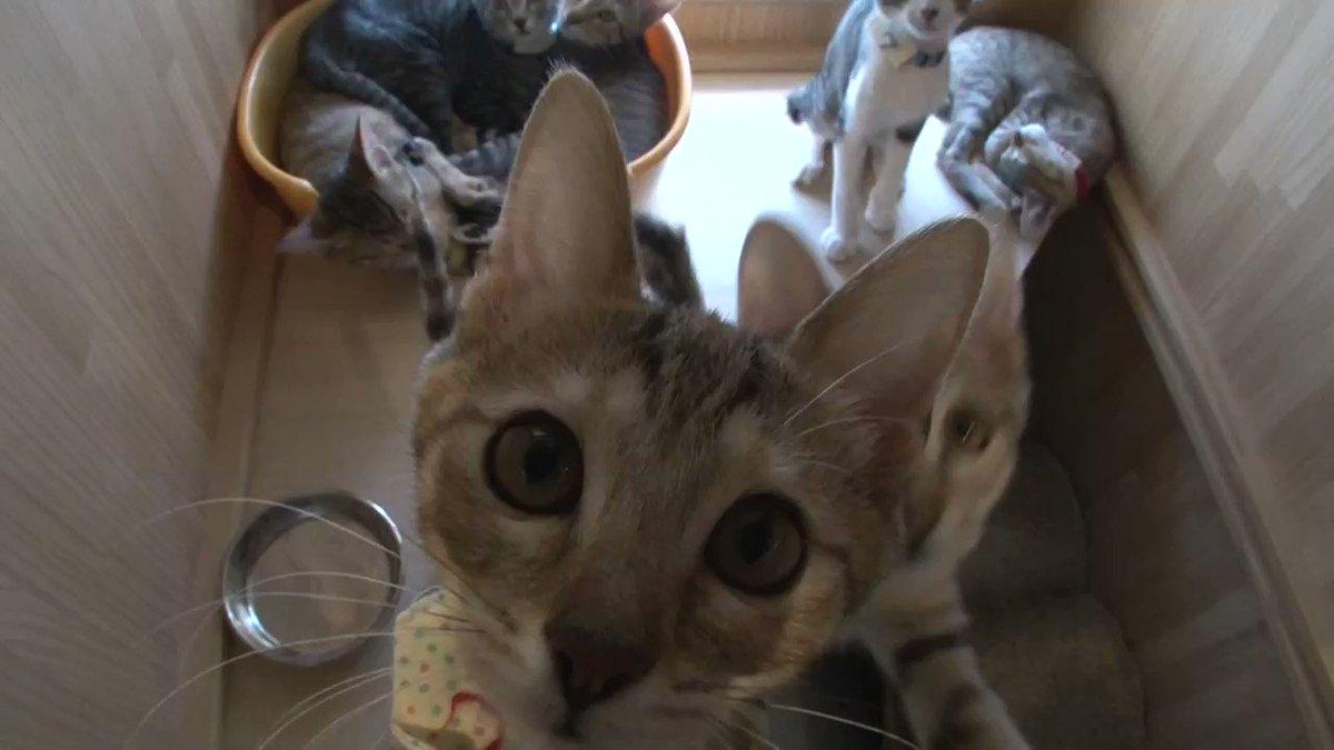 \🐈RTで猫を救おう🐈/ #BSキャッ東は多くの猫を救いたい ‼ 今日は #猫の日 そこで #BSテレ東 改め #BSキャッ東 は1RTあたり1円とし皆様からいただいたRT数に応じ、全国の犬猫保護団体へ募金を贈ります🎁 参加方法はこのツイートをRTするだけ👍 RT後に御礼のメッセージが届くよ‼