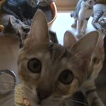 リツイートで猫が救われるBSテレ東の企画が素晴らし過ぎる