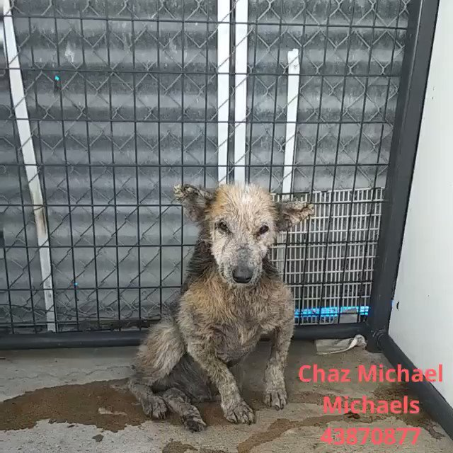 EMERGENCY🆘ANOTHER ONE🚨POOR CHAZZ WITH SEVERE SKIN COND. NOT EVEN A BLANKET FOR HIM ...LAYING IN HIS PEE...💔DEADLINE 72 HOURS OR 💀 PALM VALLEY ANIMAL SOCIETY/BEST FRIENDS SOCIETY Edinburg TX rescue@pvactx.org     SHAME TX !!!!