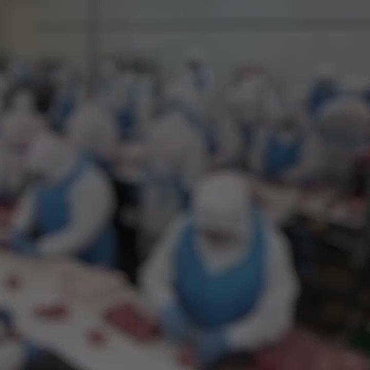 Maltraitance animale en abattoirs : le fiasco de la loi alimentation. Les mesures ont été nombreuses ces dernières années, face à une opinion publique secouée par les vidéos de L214. Mais les résultats peinent à se concrétiser.  Enquête.https://www.franceculture.fr/societe/maltraitance-animale-en-abattoirs-le-fiasco-de-la-loi-alimentation…