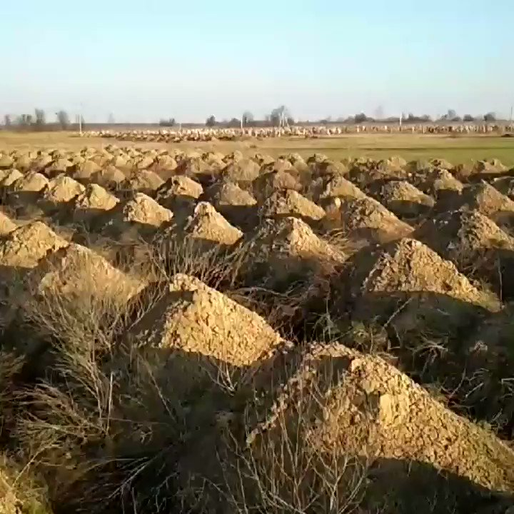Authorities in #Dnipro prepare hundreds of graves for possible #COVID19 victims #Ukraine pic.twitter.com/6bHhbI9FUt