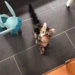 やめてあげて嫉妬心から猫に攻撃するグレイシア
